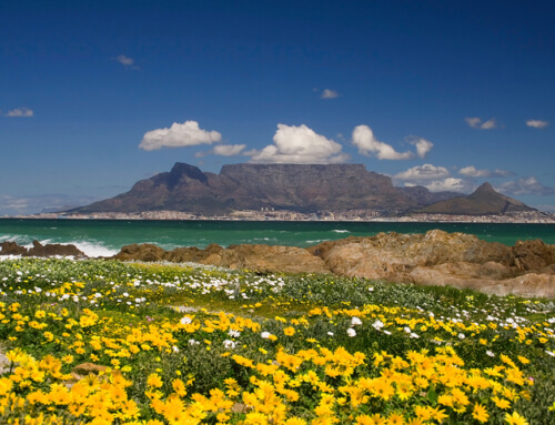 5 Awesome Things to do Along the West Coast of South Africa
