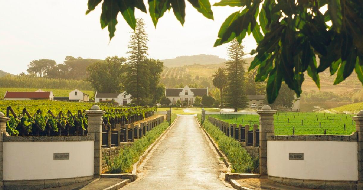 constantia winelands cape town